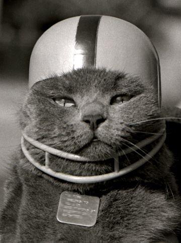 football cat